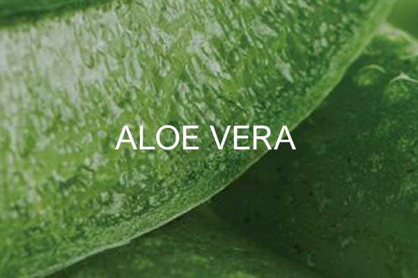 linija-aloe-vera